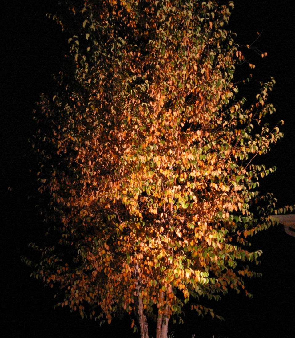 Fall Tree Lighting