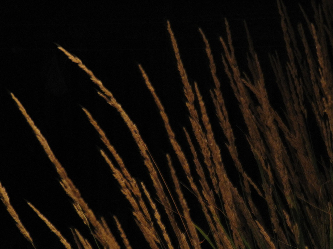 Grass Lighting Guelph